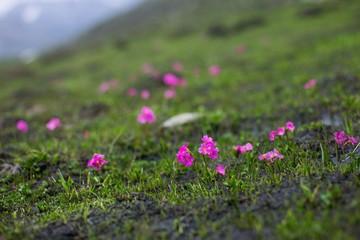 Beautiful spring colors