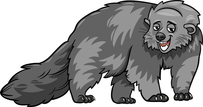 bearcat animal cartoon illustration