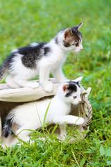 Cute little kittens, outdoors