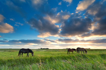 Wall Mural - horses grazing on pasture at sunset