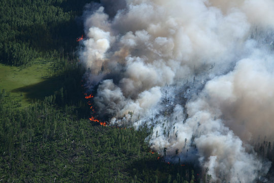 Forest in fire, top view
