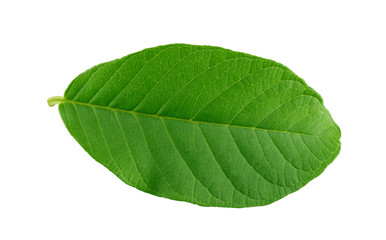 leaves guava set close up macro isolated on white