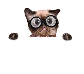 crazy silly cat with funny glasses behind blank placard