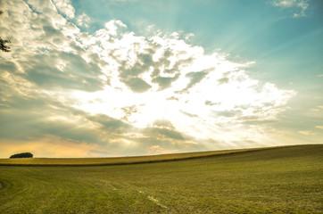 Zielona łąka