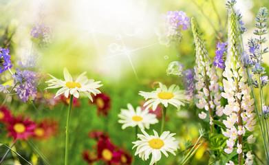 Wild beautiful flowers.Summer meadow
