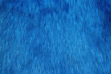 Blue fur background Wall mural