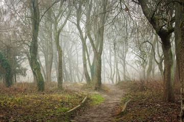 footpath in morning foggy forest