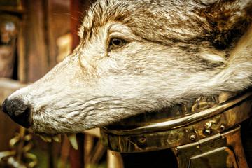 Römischer Legionär Helm Wolf