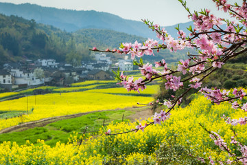 Poster de jardin Chine Rape flowers and Chinese ancient buildings in Wuyuan, China