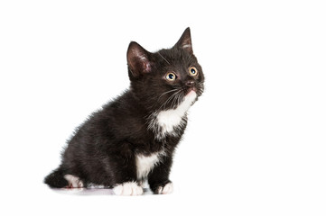 Little black and white kitten looking up