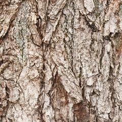 Tree's bark fragment