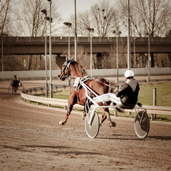 Harness Racing .horse