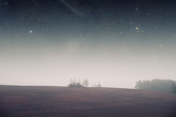night field forest . Elements of this image furnished by NASA