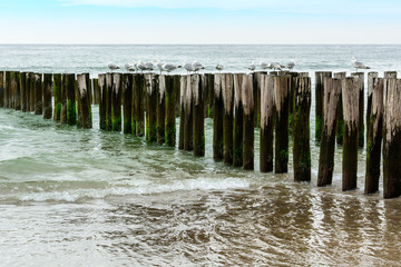 Wall Mural - breakwaters with gulls  on the beach, sea in Domburg Holland