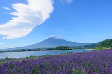 Mt. Fuji and Lavender at Lakeside of Kawaguchi