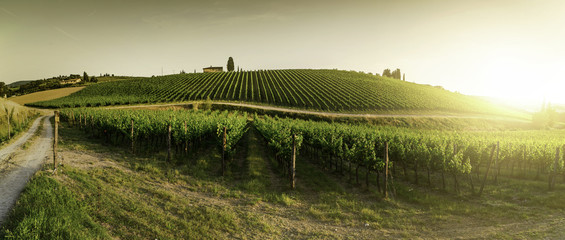 Foto op Textielframe Wijngaard Vineyards in Tuscany