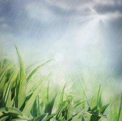 Spring rain shower