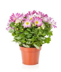 Fototapeta Potted flower obraz