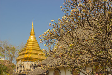 plumeria with golden Thai pagoda in temple and blue sky