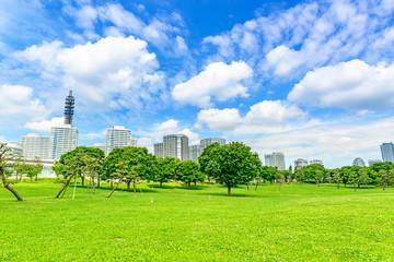 Landscape grass prospects the Yokohama buildings of landmark