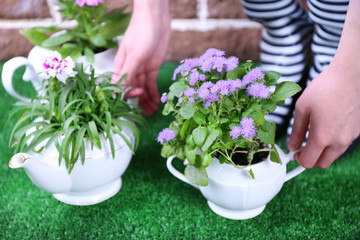 Gardener holding flowers in decorative pots, close-up