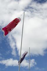 Japanese koi carp wind socks blow in the wind