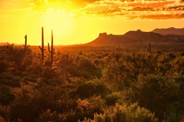 Fototapete - Sunset view of the Arizona desert with cacti and mountains
