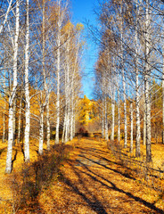 Autumn in a park. Fall season