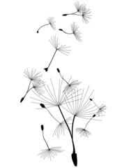 Pusteblume Löwenzahn Samenflug