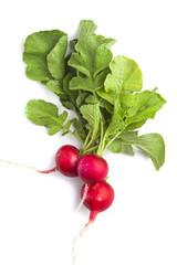 Fototapeta Bunch of fresh radish siolated on white obraz