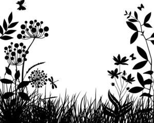 Meadow plants IV