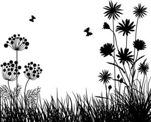Meadow plants V