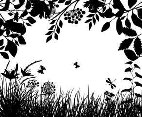 Meadow plants VI