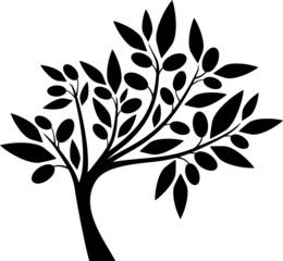 Olive tree I