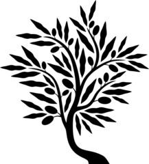 Olive tree III