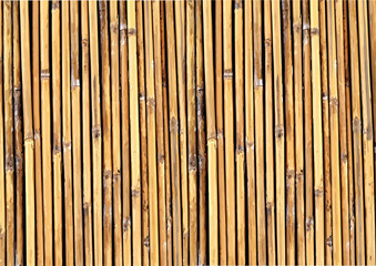 Bamboo background illustration