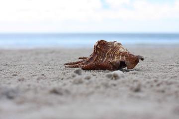 Beach and sea shell and sky
