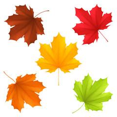 Fototapeta Collection of color autumn leaves. obraz