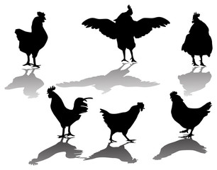 six chicken silhouettes and shadows isolated on white