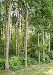 forest fir entrance