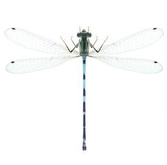 Dragonfly Enallagma cyathigerum (male)