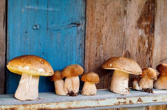 Mushrooms cepes