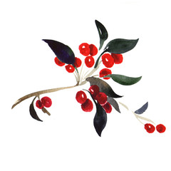Red berries on branch isolated