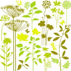 Green big set of plants