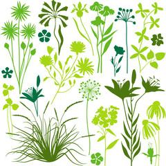 Green botany set