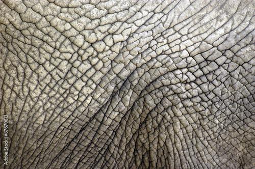 elefantenhaut stockfotos und lizenzfreie bilder auf bild 67670813. Black Bedroom Furniture Sets. Home Design Ideas