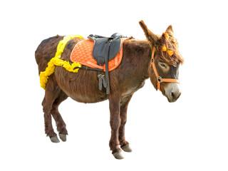 Smart Donkey isolated on white background