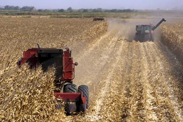 Combines Harvests Corn