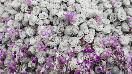 background of flowers roses and orchids