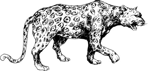 hand drawn cheetah